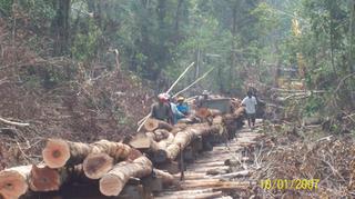logging-ensika 026s.jpg